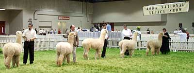 AOBA National Alpaca Show
